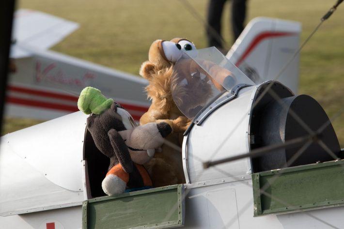 30 september Knuffelvliegen | PMF Houthalen-Helchteren (B)